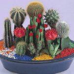 Cómo y cuando trasplantar los cactus