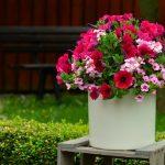 Cómo cuidar plantas de exterior