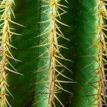 Cómo cultivar cactus