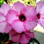 Cómo cuidar flores tropicales