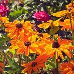 Cómo hacer un jardín de flores silvestres