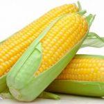 Cómo y cuándo sembrar maíz.