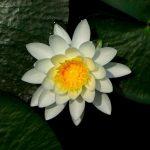 Plantas Acuáticas – Cuáles son y Dónde se encuentran