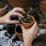 Para qué sirven las plantas