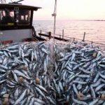 Cómo conseguir un trabajo de pesca