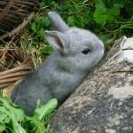Cómo cuidar conejos enanos