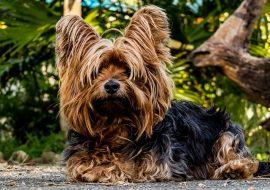 Como cuidar un cachorro