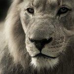 Qué significa soñar con leones