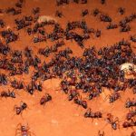 Qué significa soñar con hormigas